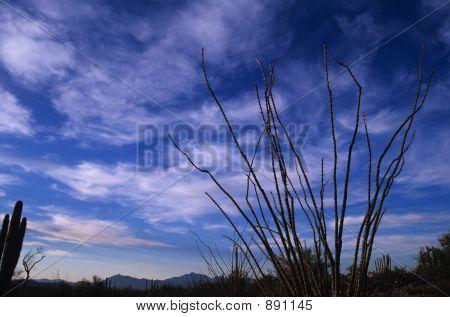 Thorny Bush And Az Sky