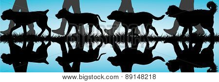Amstaff, Presa Canario, Labrador And Caucasian Shepherd Silhouettes Walking By The Water