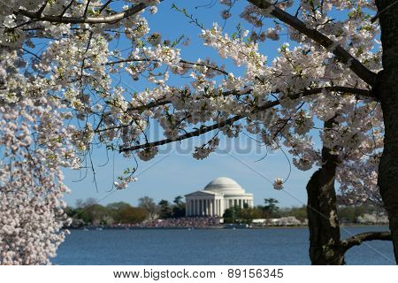 Thomas Jefferson Memorial Framed With Flowers