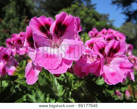 Beautiful Pink Flowers