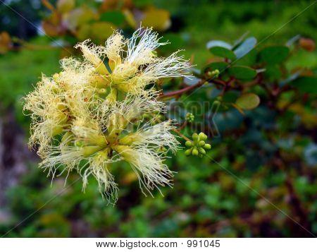 Jamaican Wild Flower #1