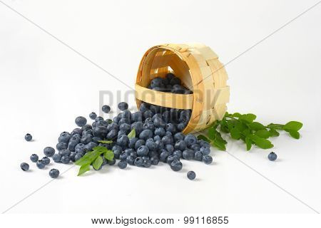 blueberries spilled from the basket