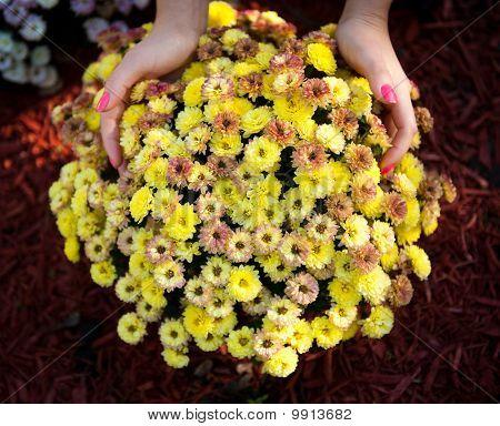 Flowers In Girl Hands