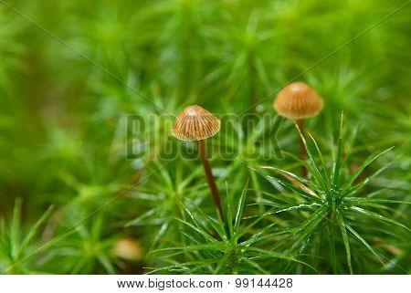Mushrooms In A Green Grass