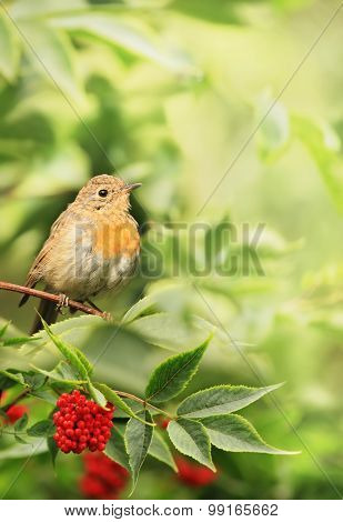 Little Bird In The Foliage
