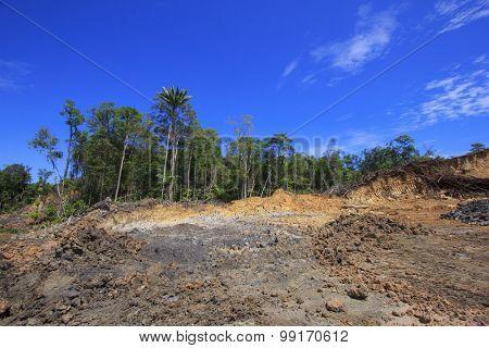 Deforestation logging environmental damage destruction of rainforest poster
