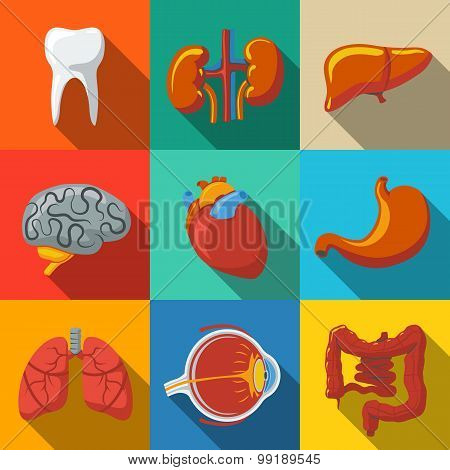 Internal human organs flat long shadow icons set with - heart, brains, lungs, liver, kidneys, intest
