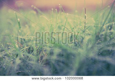 Dew On Grass Vintage