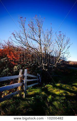 Tree And Split Rail Fence