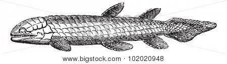 Osteolepis or Bone Scale fish isolated on white, vintage engraved illustration. Trousset encyclopedia (1886 - 1891). Extinct fish.