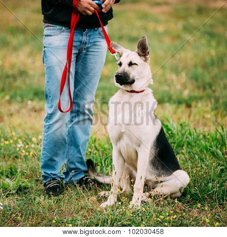 Young Happy East European Shepherd Dog sitting at feet of owner