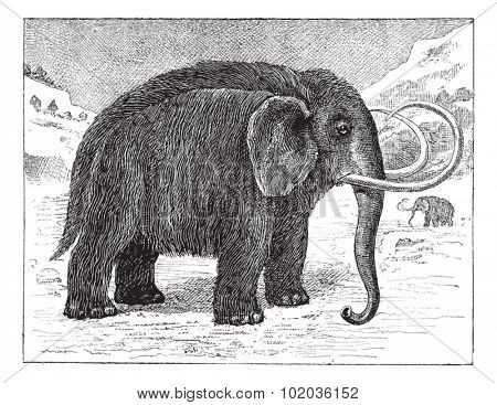 Mammoth or Mammuthus sp., vintage engraved illustration. Dictionary of Words and Things - Larive and Fleury - 1895