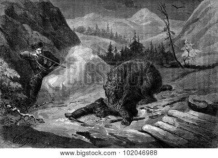 Death of Bear. His comrade visa animal to default shoulder, vintage engraved illustration. Journal des Voyage, Travel Journal, (1880-81).