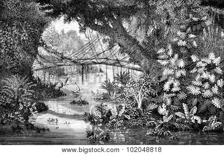 Xieng Khong Pon bamboo, vintage engraved illustration. Le Tour du Monde, Travel Journal, (1872).