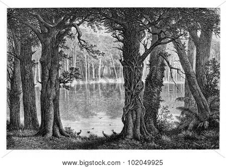 Lake Ligouri, in Angola, Southern Africa, drawing by De Bar based on the English edition, vintage illustration. Le Tour du Monde, Travel Journal, 1881