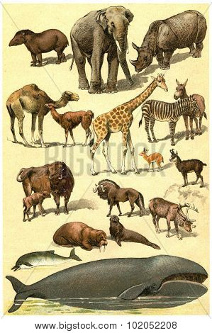 Mammals, vintage engraved illustration. La Vie dans la nature, 1890.