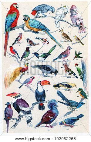 Exotic birds, vintage engraved illustration. La Vie dans la nature, 1890.