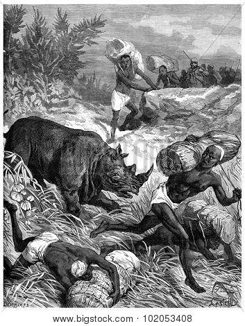 Paris of Lake Tanganyika, A rhinoceros puts stir among carriers, vintage engraved illustration. Journal des Voyage, Travel Journal, (1880-81).