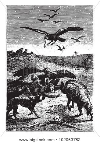 Wild beasts inhabitants of the land, vintage engraved illustration. From 15 year's old captain book from Jules Verne - 1880