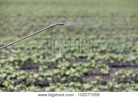 Close Up Of A Crop Sprayer, Nozzle Spraying Fertilizer On Crop