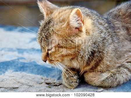 Dozing Cat
