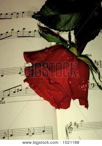 Rose & Notes