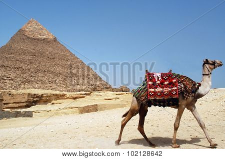 Pyramid Of Chefren, Giza, Egypt