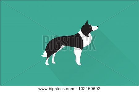 border collie icon