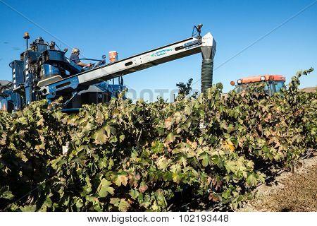 Grape Harvesting At A Winery