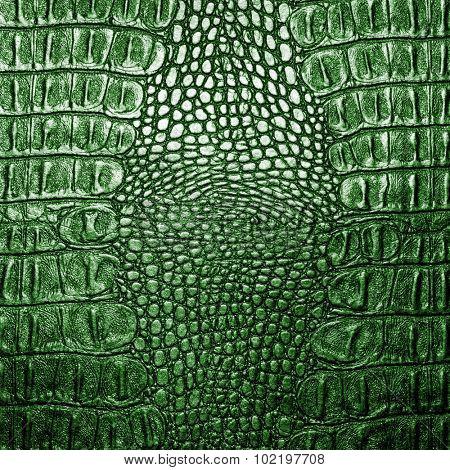Green crocodile leather texture closeup background.