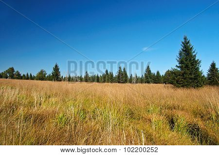 Peat-bog in Krusne hory mountains