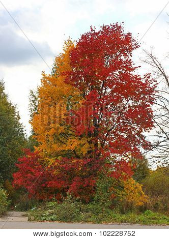autumn, yellow and red leaves of the tree