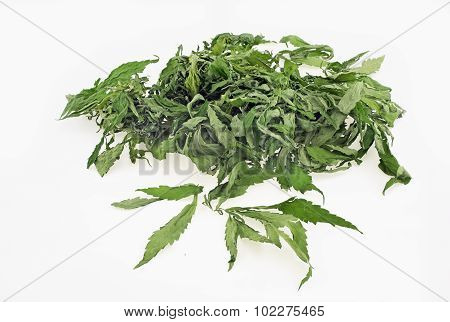 Dried Hemp Leaves