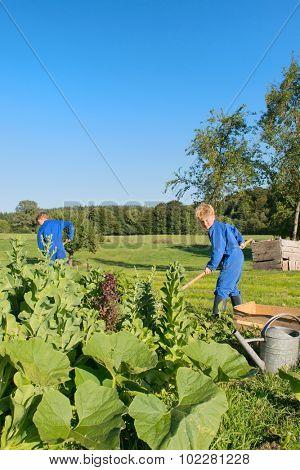 Farm boys working in the vegetable garden