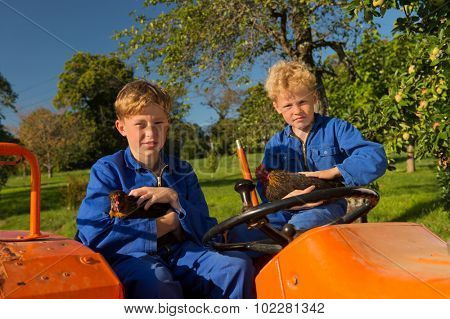 Farm boys with chickens riding on orange tractor