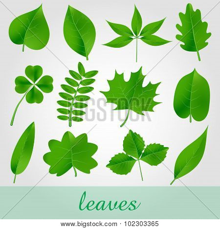 Natural Green Beautiful Leaves Icon Set Eps10