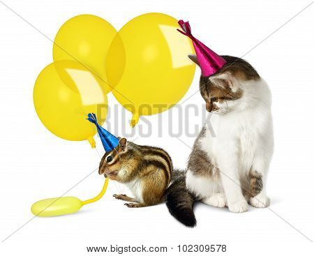 Birthday Concept, Funny Cat And Chipmunk With Balloons