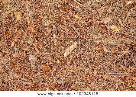 Natural Undergrowth Background With Pine Cones And Needles