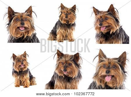 Sequence of photos of a beautiful little dog