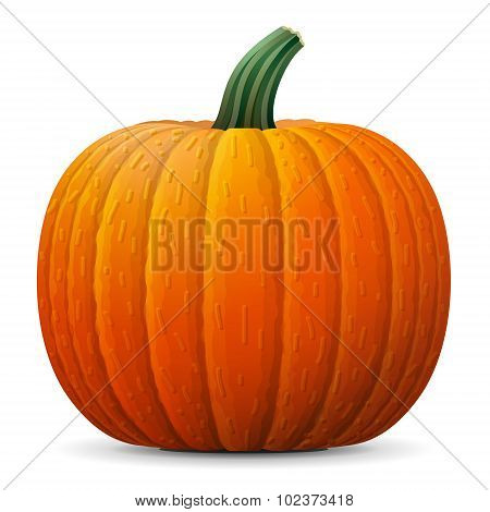 poster of Winter squash isolated on white background. Qualitative vector illustration for agriculture vegetables cooking halloween gastronomy thanksgiving olericulture etc. It has transparency blending modes gradients