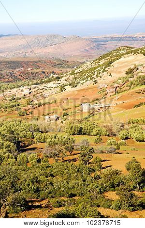 dades valley in atlas moroco africa ground tree and nobody poster