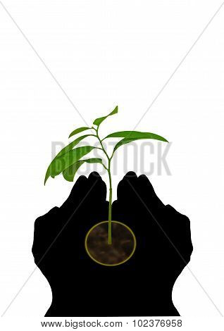 Seedling In Cupped Hands Silhouette On White
