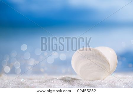 white sea shell  on   glitter and sea blue background