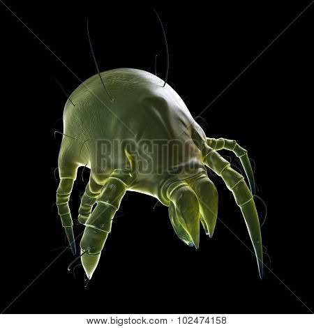 medically accurate illustration of a dust mite