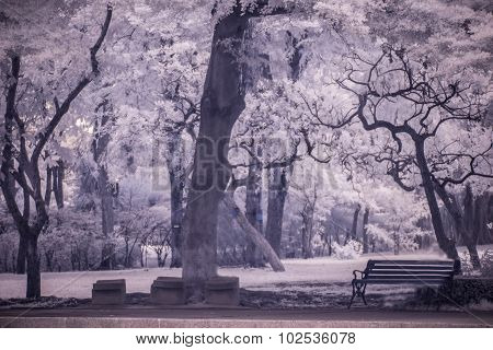 Landscape Garden Tree And Grass (Infra-red Photo)