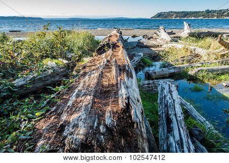 Seahurst Beach Log