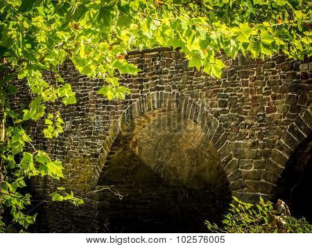 Stone Arches under Bridge Framed by Bright Green Leaves