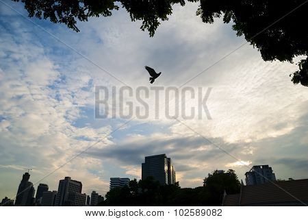 A bird in a park and building background