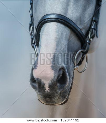 Muzzle of grey horse with white mark close up