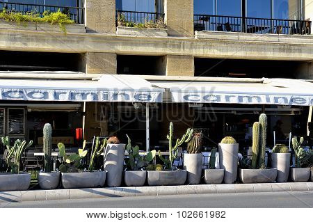 Restaurant Terrace With A Potted Cactus